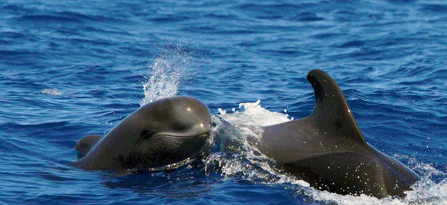 private charter Tenerife dolphin and whale watching tours
