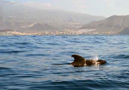 conservation of the marine environment is part of the Whale Watch Tenerife mission