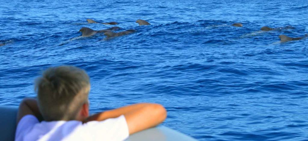 the Whale Watch Tenerife mission is sustainable tourism that supports cetacean research and conservation