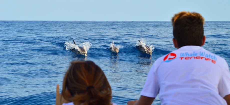 private whale and dolphin watching tours departing from Puerto Colón Marina in Costa Adeje Tenerife