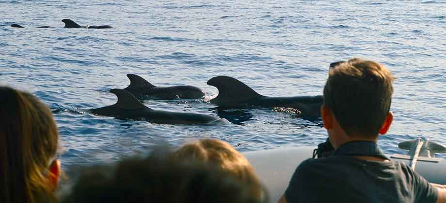 marine biologist led whale and dolphin watching tours in Tenerife