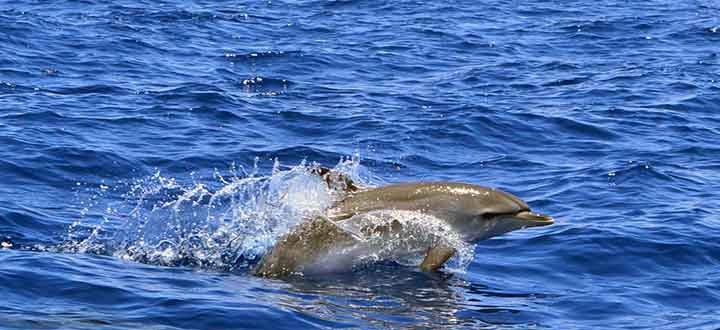 info on whale watching tours terms and conditions in Tenerife