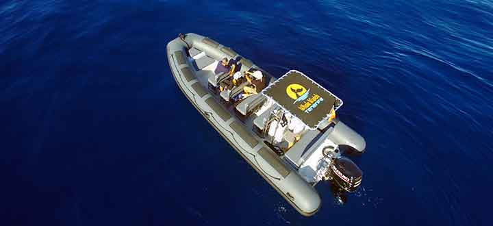 custom built whale and dolphin watching tours boat on Tenerife